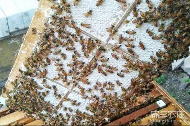 咸阳蜜蜂养殖技术