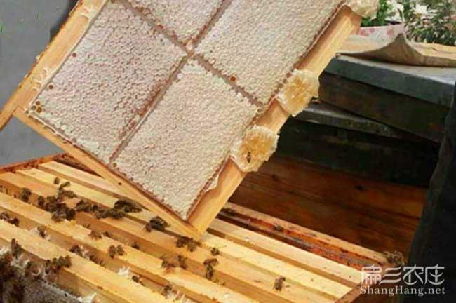 娄底蜂蜜批发