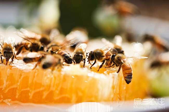 大理蜜蜂养殖技术培训