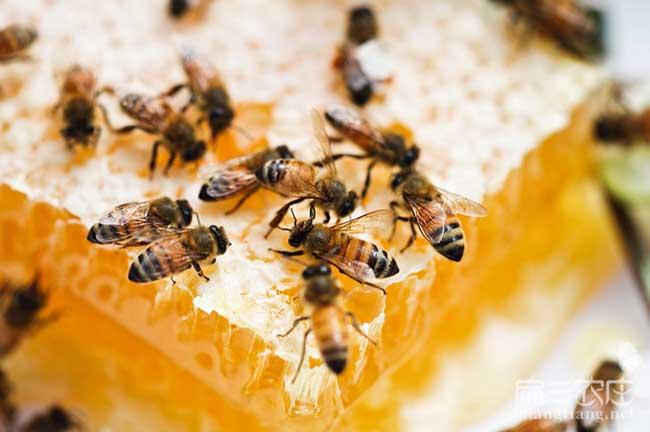 湖南蜂蜜批发