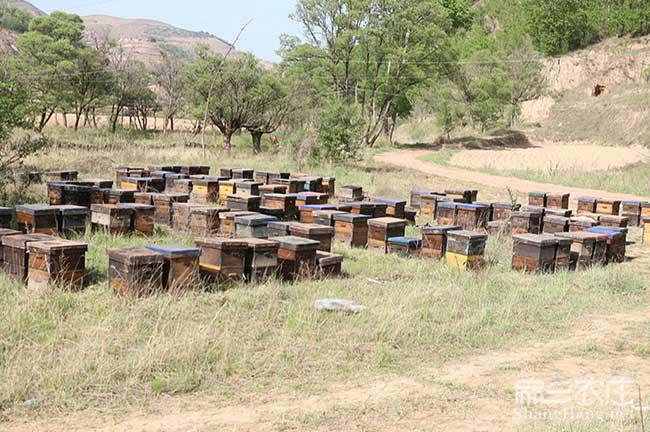 西双版纳蜜蜂养殖技术