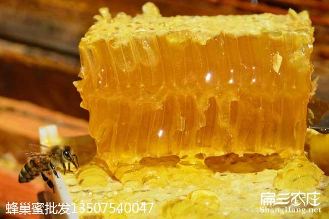广东蜜蜂养殖技术培训