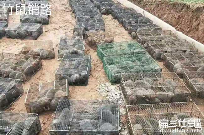 闽西竹鼠养殖基地