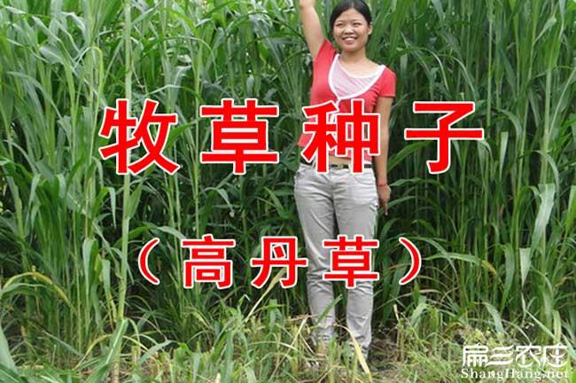 潼关县扁山发展油茶生