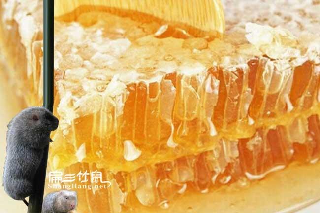 萍乡蜜蜂养殖