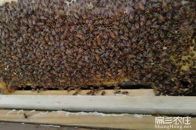广州蜂巢蜜厂家