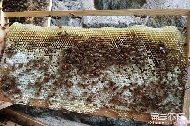景德镇蜜蜂批发