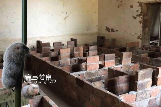 红砖建造竹鼠舍
