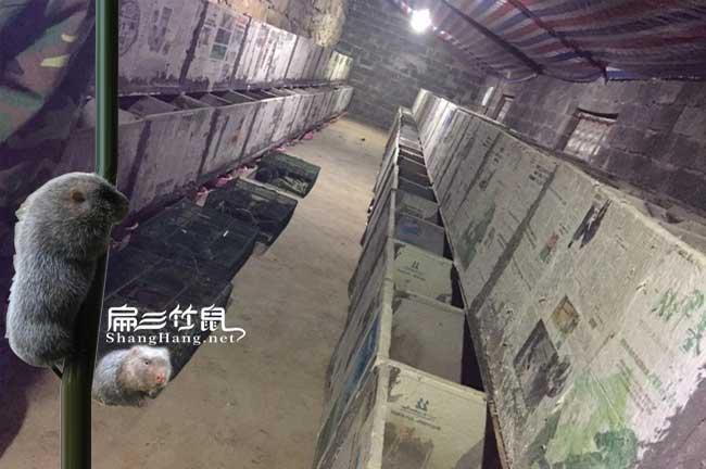 立体水泥竹鼠养殖舍