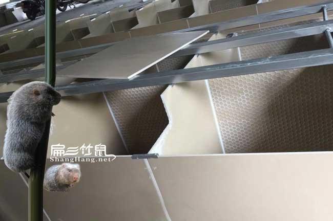 瓷砖竹鼠养殖池建造