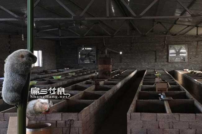 平面竹鼠养殖池建造