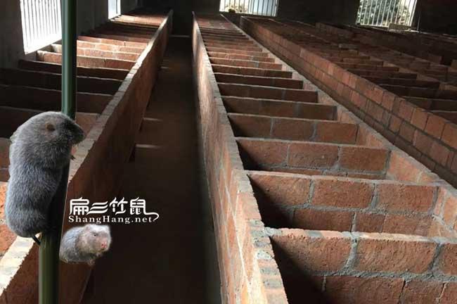 红砖平面竹鼠养殖池子
