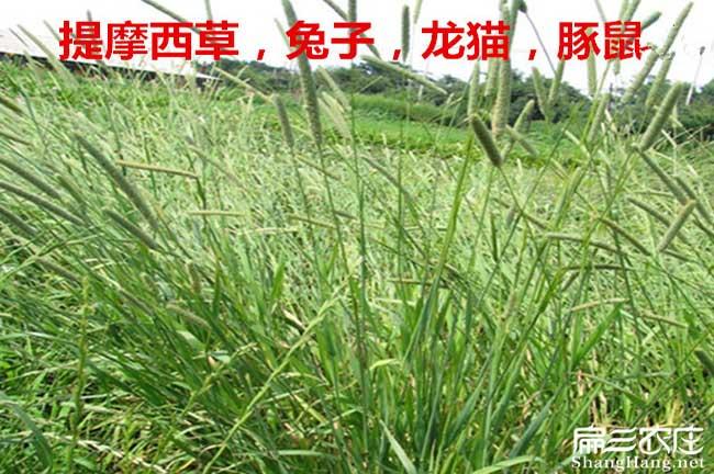 兔子吃的草