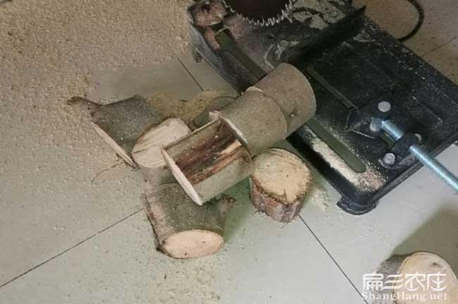渭南油茶苗的整形修剪