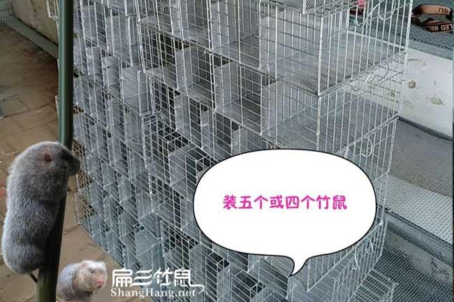 广东竹鼠批发交易市场