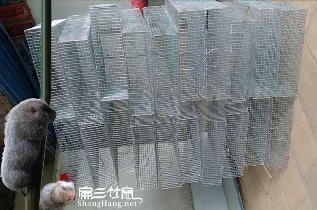 佳县茶树苗种植的品种