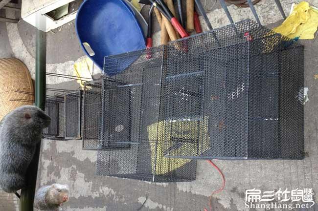 石柱竹鼠养殖基地