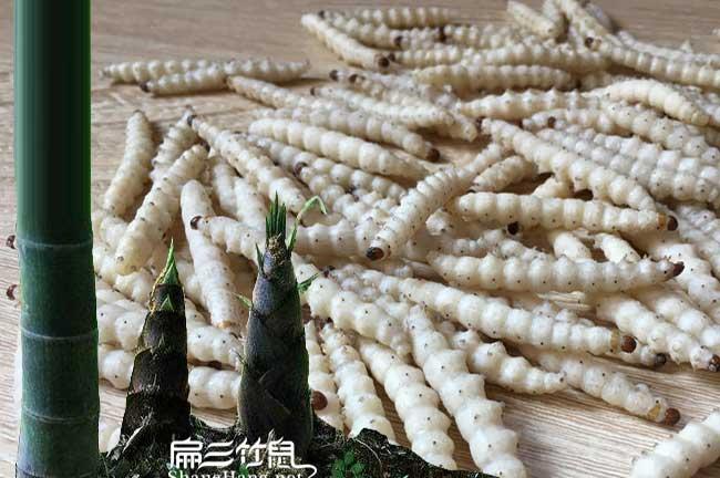 平浪油茶成林丰产技术