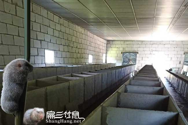 石城竹鼠养殖合作社