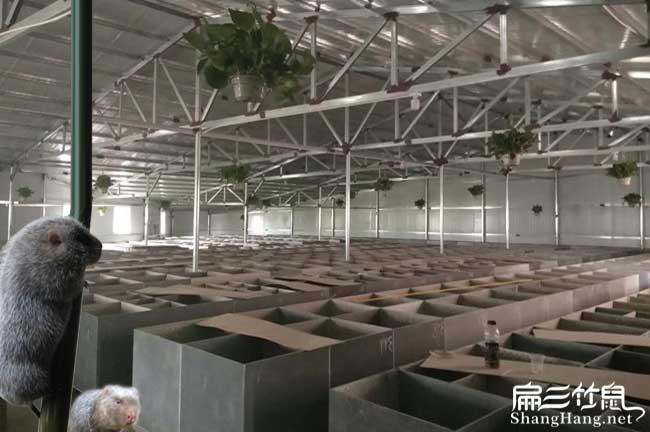 扁三竹鼠养殖基地