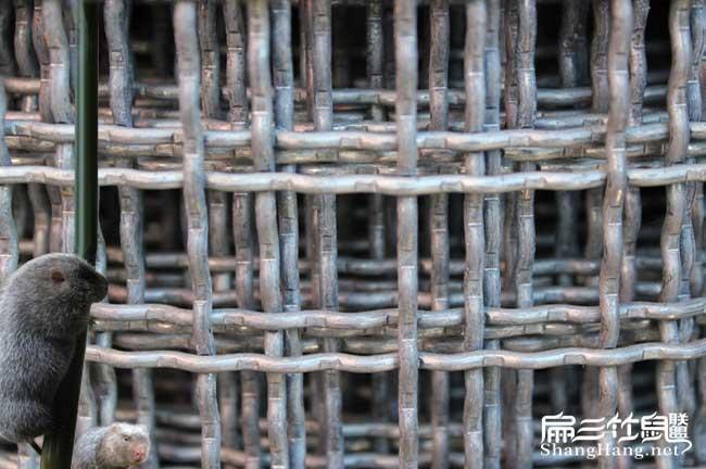 中国养殖铁丝网