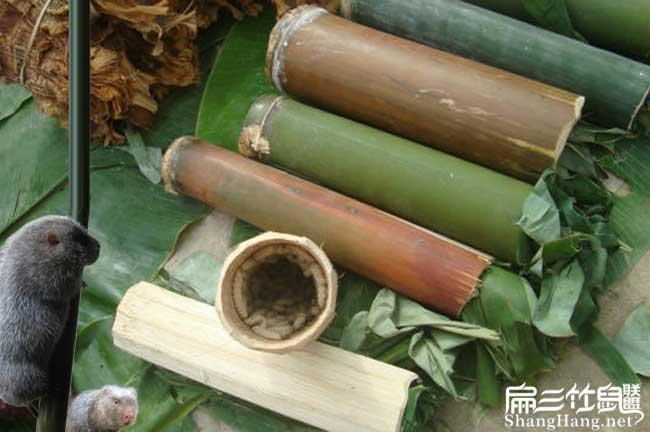 湖南竹虫养殖培训