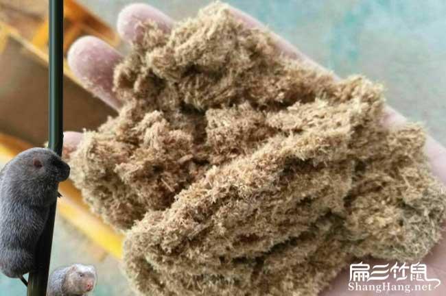 光泽竹鼠养殖