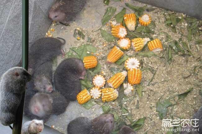 无锡兔子养殖