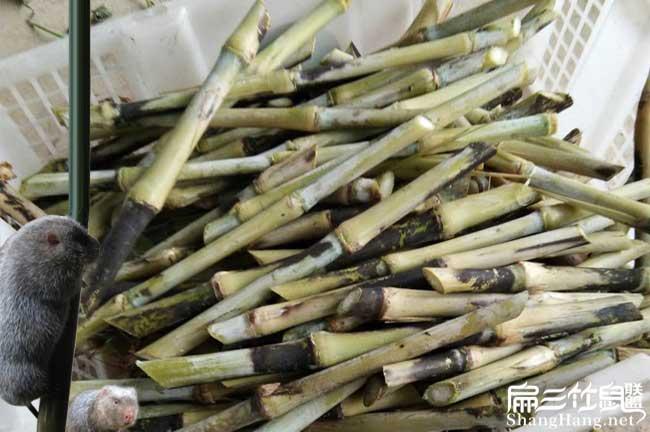 皇竹草食物