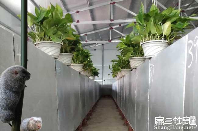 竹鼠养殖条件