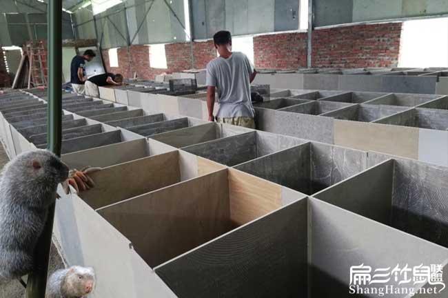 赤峰竹鼠养殖基地
