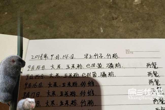 北京竹鼠养殖记