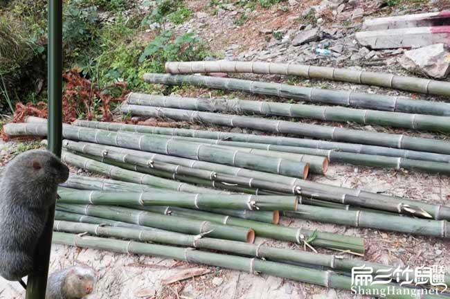 竹子吃多了有好处