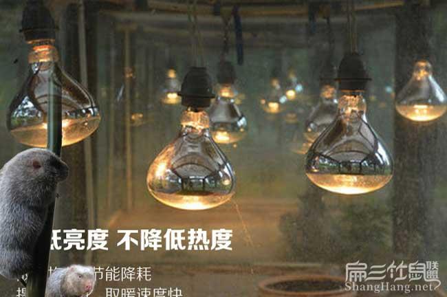 土鸡养殖保暖灯