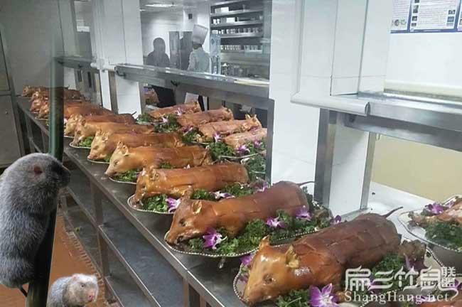 竹鼠养殖食材