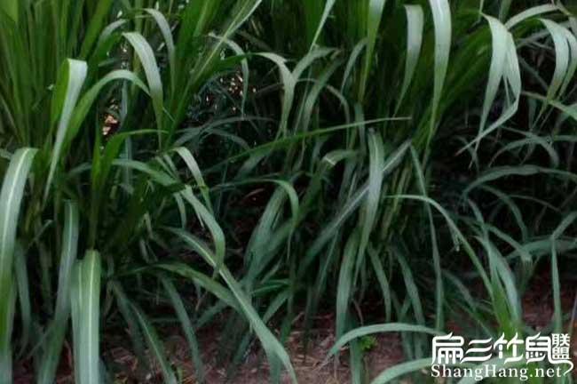 中国最大的竹鼠基地