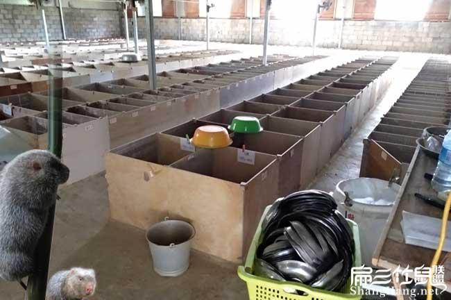 黑龙江竹鼠养殖场
