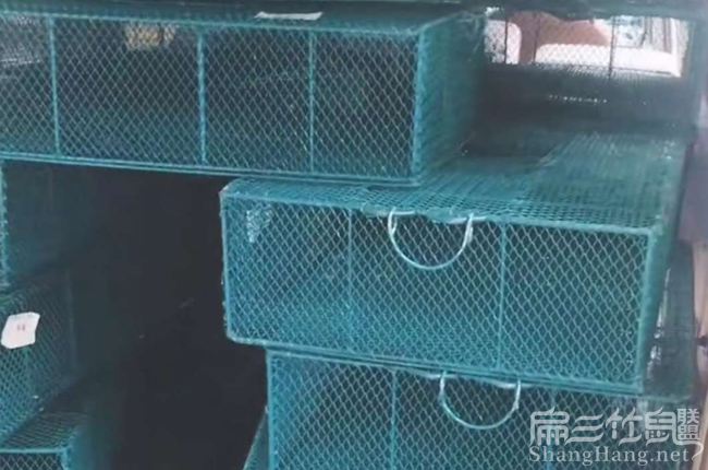 福建竹鼠基地