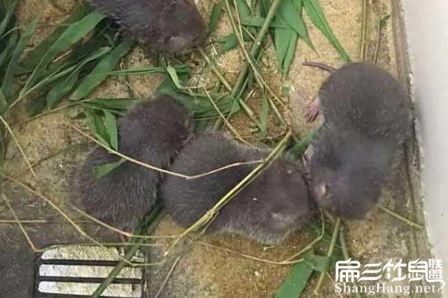 海南竹鼠养殖场
