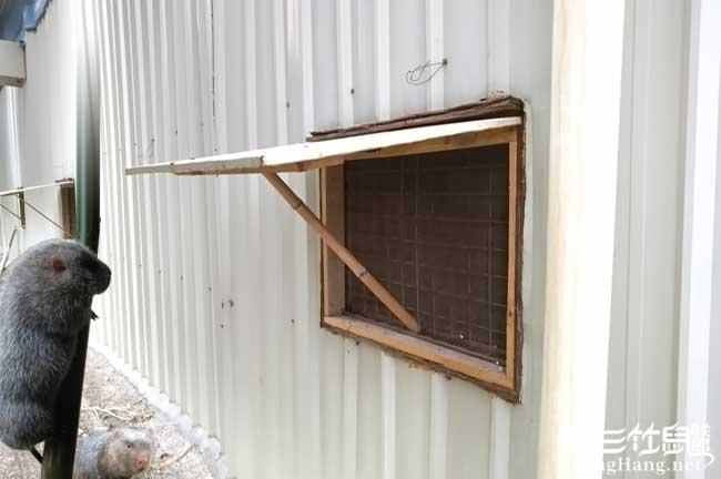 竹鼠舍开窗户