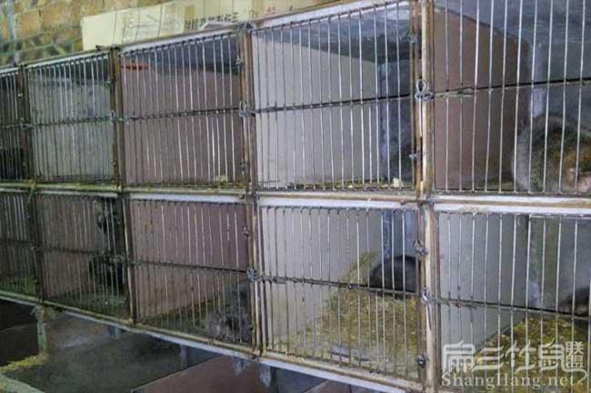 台湾竹鼠养殖