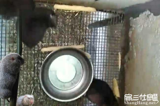 竹鼠养殖网底部