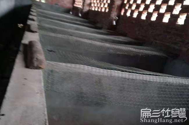 龙潭豪猪养殖场
