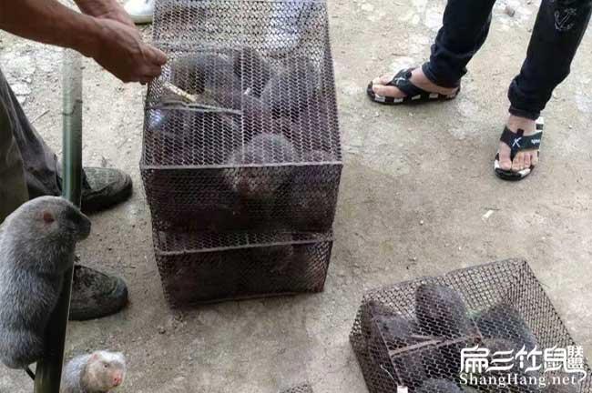 兔子批发中国