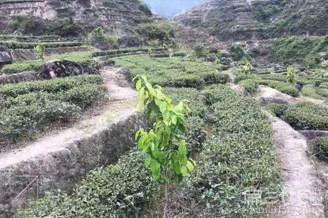 郴州油茶苗场