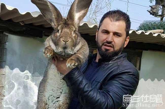 江苏大种兔种苗