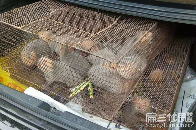 红颊竹鼠种苗价格