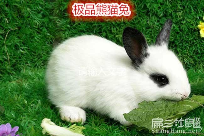 黔南州极品兔子种苗