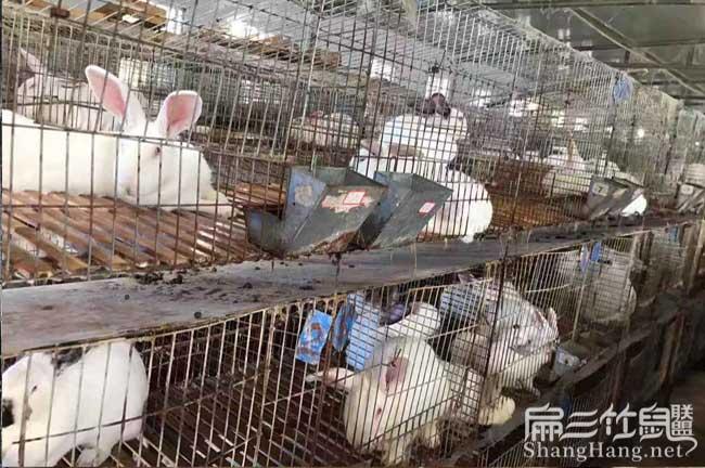 龙里兔子养殖基地