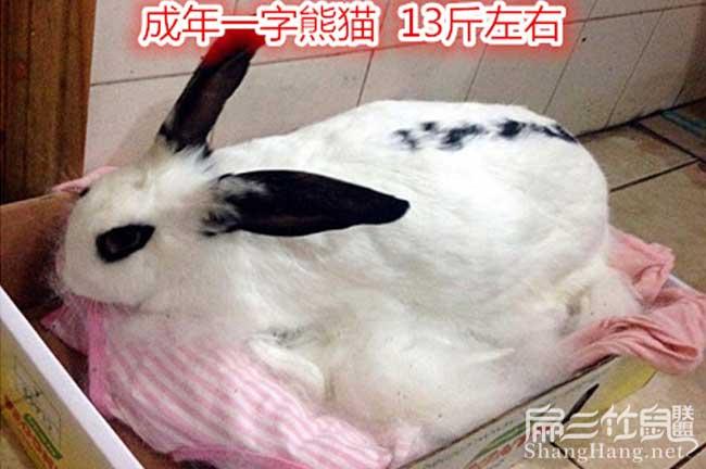 龙里兔子合作社